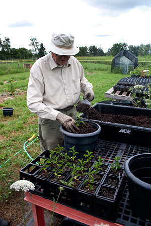 Robin Warner planting trees, Dexter Tree Farm, 2009