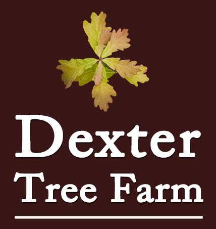 Dexter Tree Farm